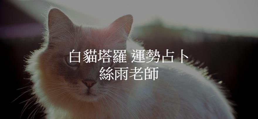 白貓塔羅運勢占卜