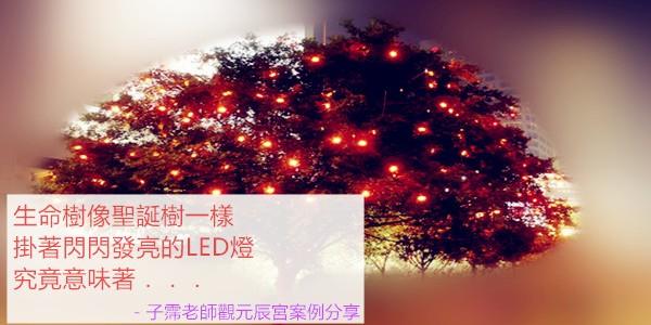 生命樹像聖誕樹一樣